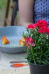 Kulinarne warsztaty międzypokoleniowe_Zielony Jazdó_Kwiaty jadalne_Fundacja ZACZYN-13